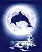 dolphin7.jpg