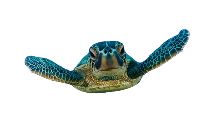 Loggerhead-sea-turtle-588x368_edited.png