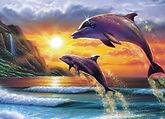 Dolphin15.jpg