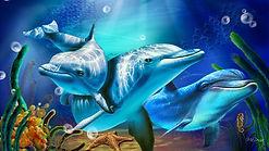 Dolphin16.jpg