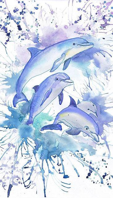 dolphin8.jpg