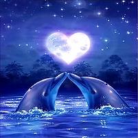 Dolphin14.webp