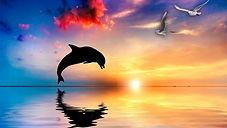 Dolphin6.jpg