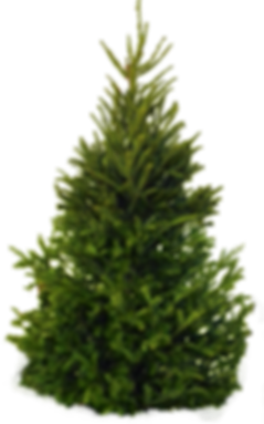 XMasTree6.png