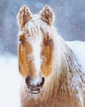 WinterHorse.jpg