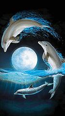 Dolphin17.jpg