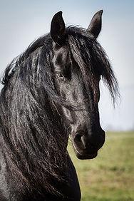 HorseHead2.jpg