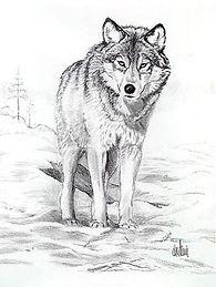 Pencil Wolf2.jpg