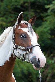 HorseHead1.jpg