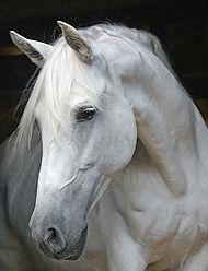 HorseHead3.jpg
