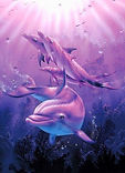 Dolphin13.jpg