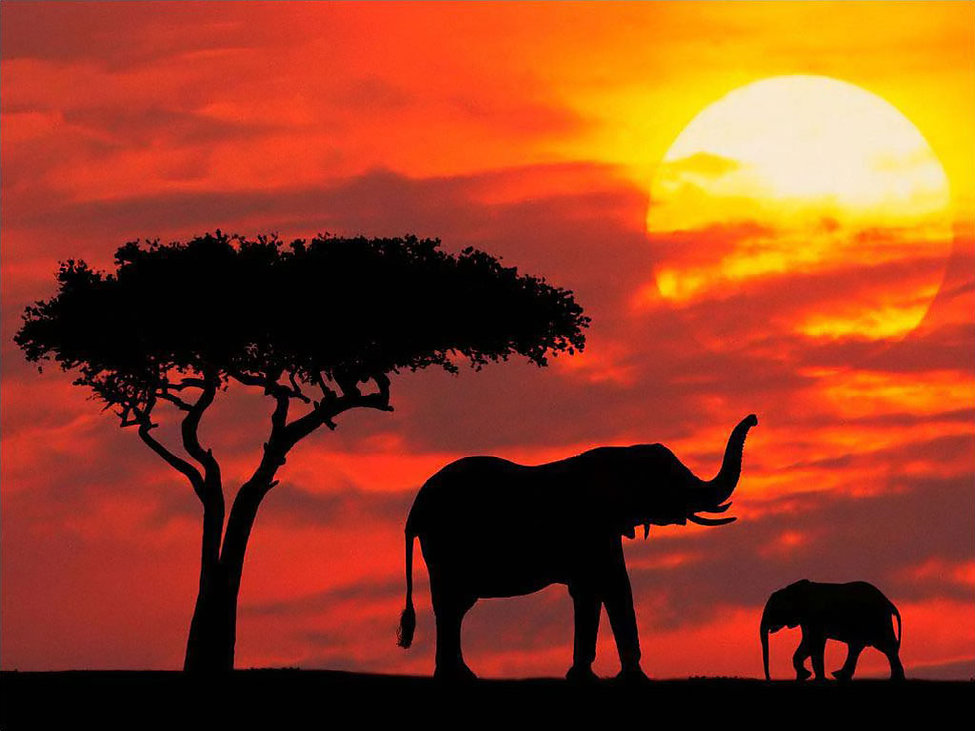 Sunset Elephants3.jpg