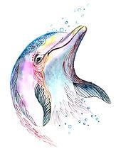 Dolphin12.jpg