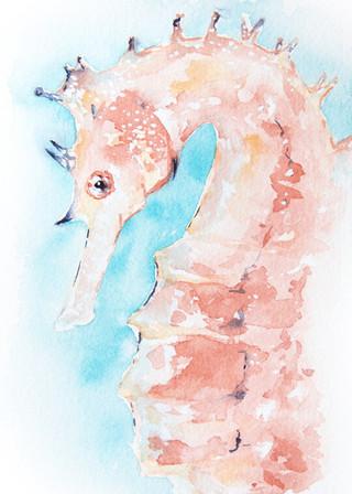 Coral Seahorse