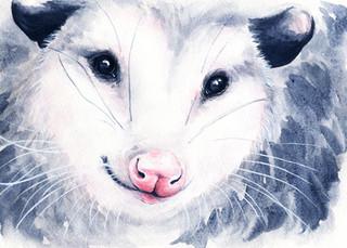 Lindsay the Opossum