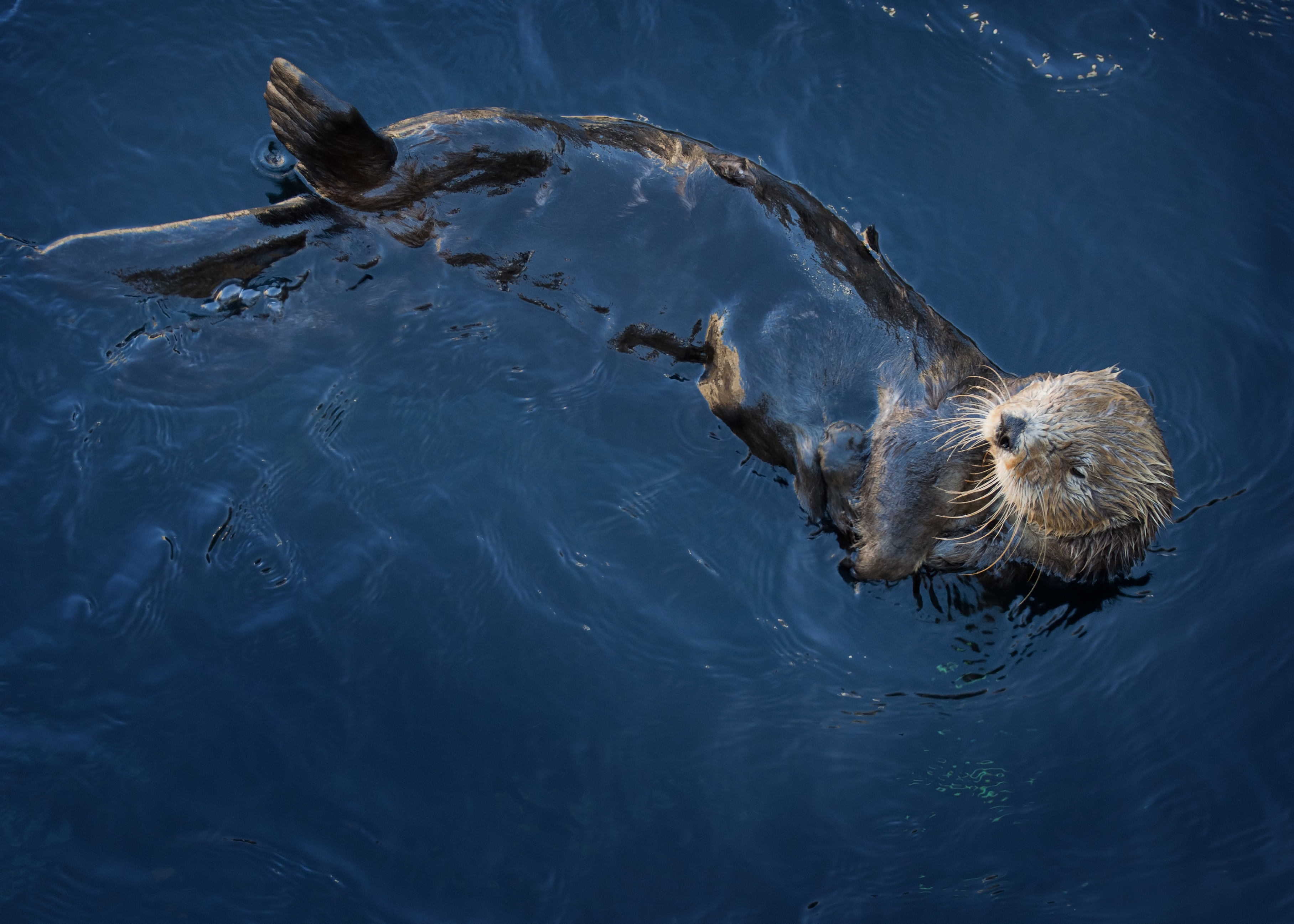 Otter Glide