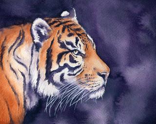 Shadow Violet Tiger