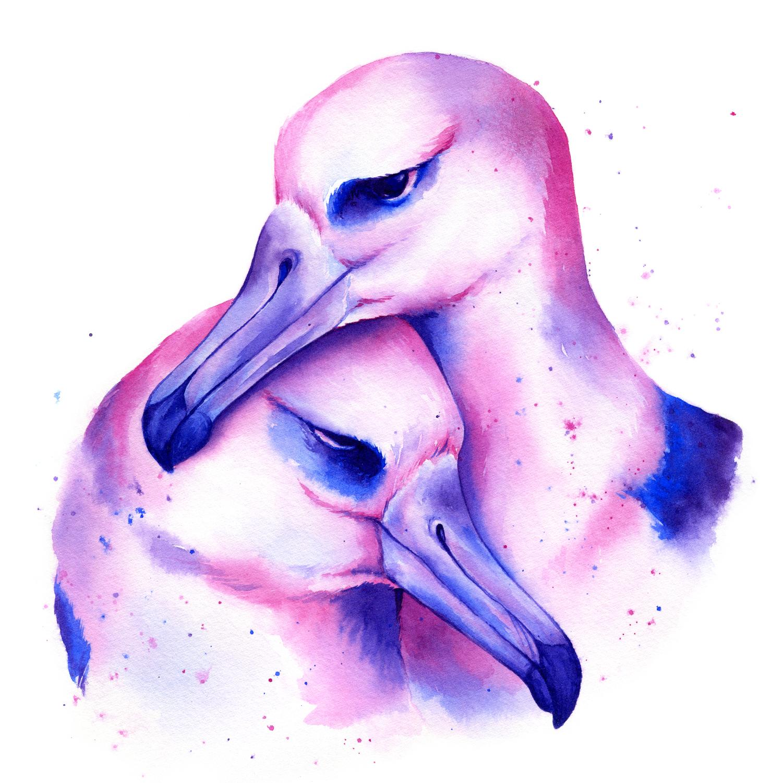 Albatross 5x5