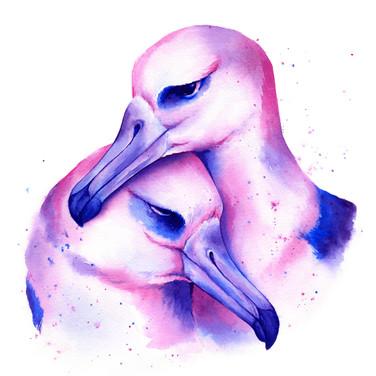 Bi Pride Albatross