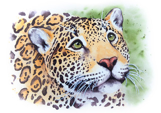 Help Us - Jaguar Portrait