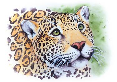 Help Us - Jaguar Portrait
