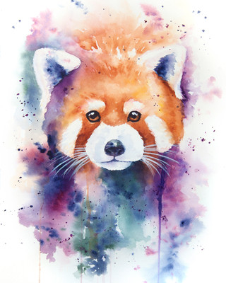 Red Panda Splash