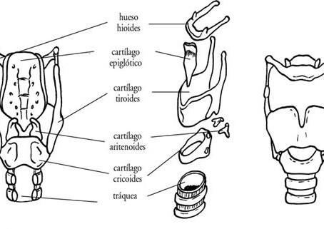 Flash de Anatomía