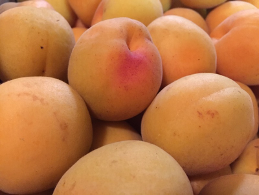 Apricot_Fruit.png