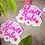 Thumbnail: Flower Babe Sticker