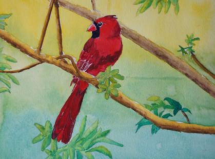 LilyW_Cardinal.jpg