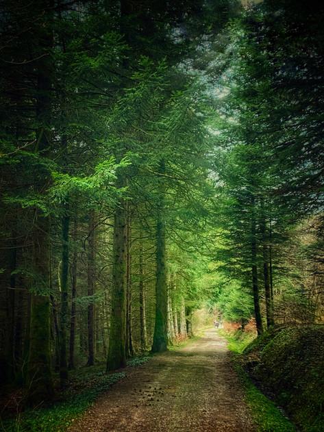 Forêt du Chalet-à-Gobet