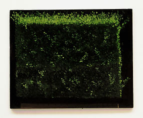 privet hedge box.jpg