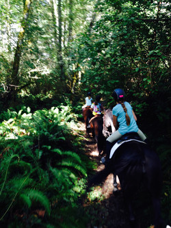Competitive Trail Ride