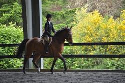 Island Horse Show