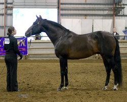 Canadian National Andalusian Show