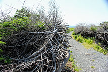 coastal trail 3.JPG