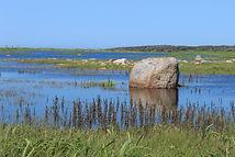 coastal trail 2.JPG
