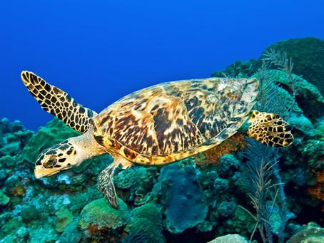 Dia 23 de Maio é o Dia Mundial da Tartaruga, sabe porque?