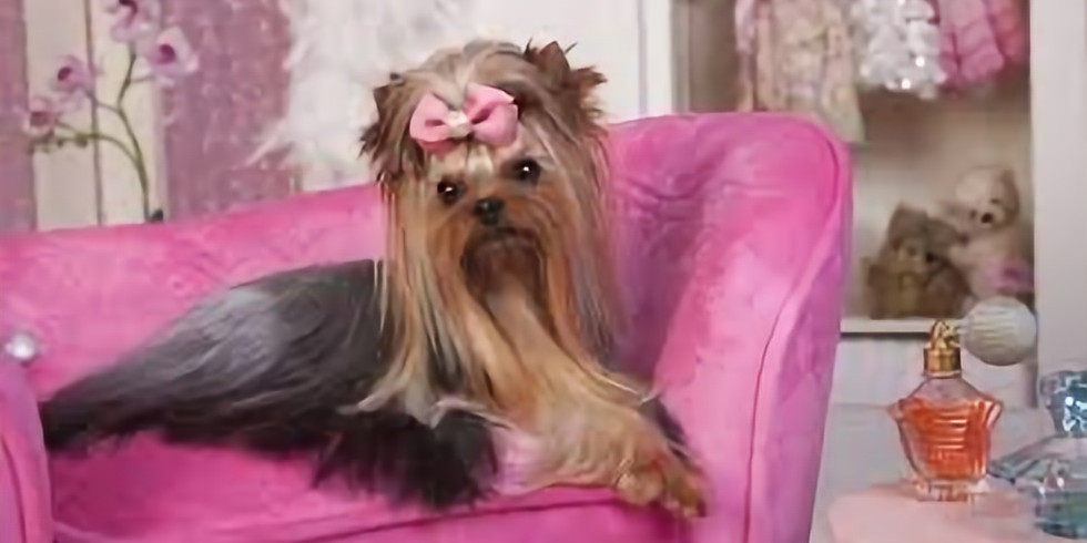 Pink Up Your Pooch