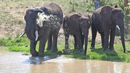 elephant whispers 2