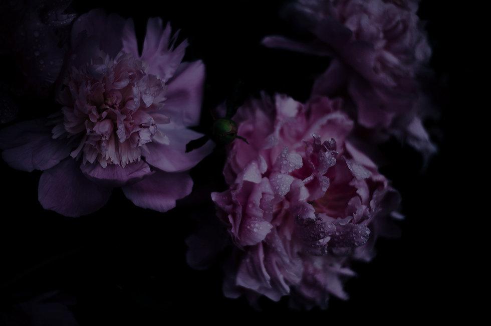 Pink%2520Blossom_edited_edited.jpg