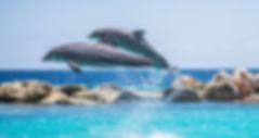 dolphins-906175_960_720[1]_edited.jpg