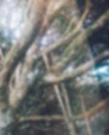 ◊ A floresta que me habita ◊ -3_edited.j
