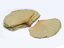 Dried Lotus Leaves
