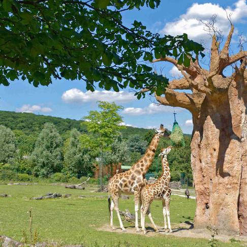 Opel-Zoo: 2000 zeitgleich