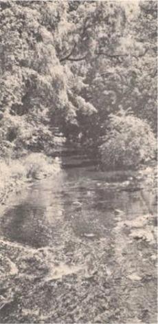 Hohokus Brook