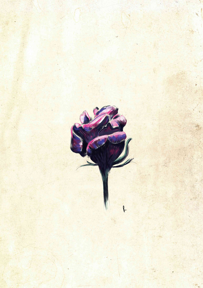 Rose Colour Sketch_.jpg