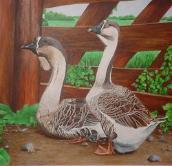 Geese at Gate