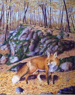 'Fox Gatineau Park'.