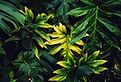 Canva - Beautiful Tropical Leaves.jpg